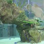 ライカムの水槽【アクアリウム】圧巻!どんな種類の魚がいる?