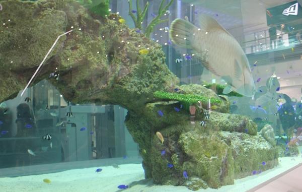 ライカム 水槽2